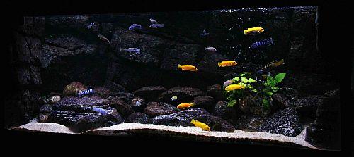 kalksten til akvarie