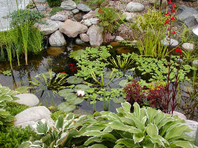 Vandplanter til havebassin